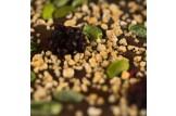 chocri Zartbitterschokoladentafel 'Beerenstark' mit Brombeeren,Pistazien und Haselnusskrokant Nahaufnahme, Detailansicht