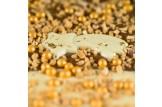 chocri 'Gold Night' Weihnachts-Schokoladen-Tafel Detailansicht
