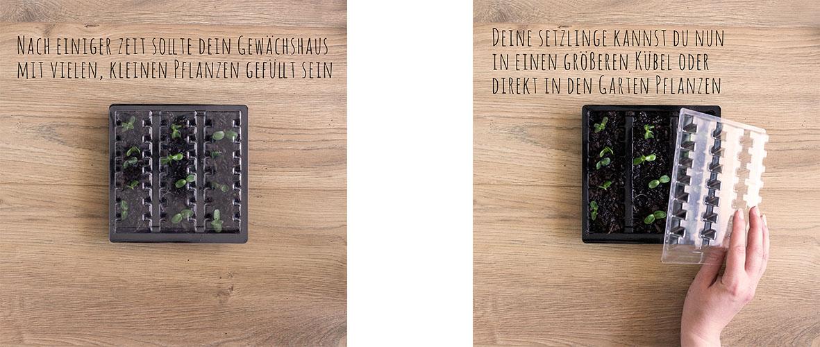 chocri recycling Anleitung Mini Gewächshaus mit veganer Weltreise - Schritt 5 und Ergebnis
