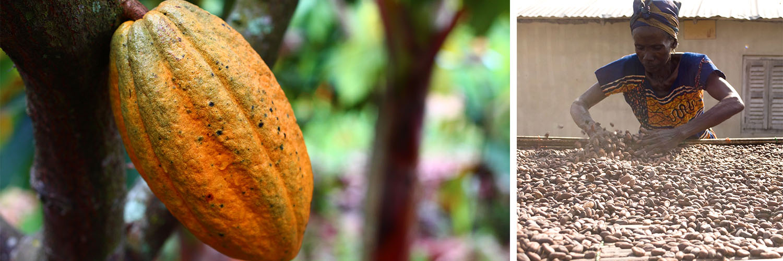 chocri Fairtrade Kakao Programm