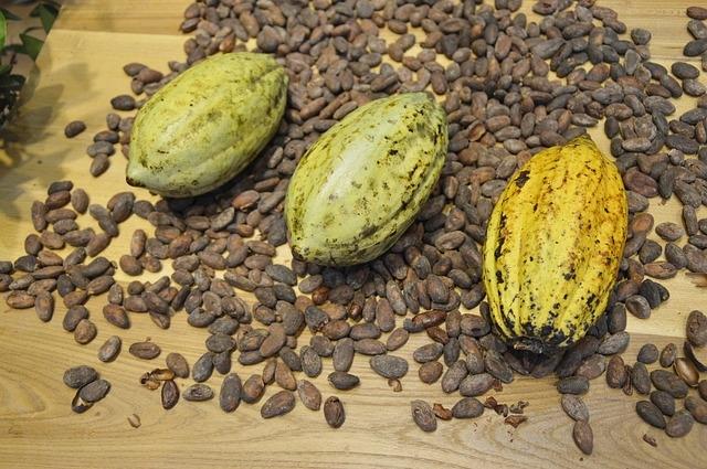 Kakao Bohnen
