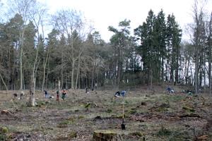 Großeinsatz der chocri-Belegschaft beim Baumpflanzen nahe Straußberg bei Berlin